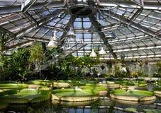 水生庭院在用水厂的不同的种类的阳光下 荷花,维多利亚Amazonica,凤眼兰 免版税库存图片