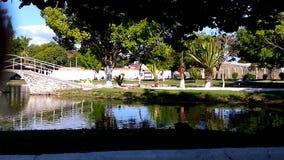 生态公园瀑布paulista, SP巴西 免版税图库摄影