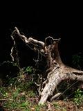 生态划分为的问题根结构树 图库摄影