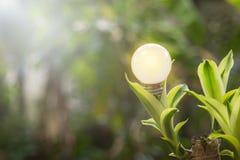 生态和saveing的能量电灯泡带领了与自然电 库存图片