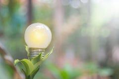 生态和saveing的能量电灯泡带领了与自然电 免版税库存图片