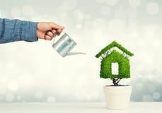 生态回收和有植物的eco建筑的概念罐的 免版税图库摄影