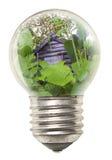生态学电灯泡的概念 免版税库存照片