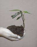 生态学的良心 图库摄影