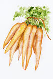 Ecologica红萝卜 向量例证