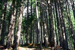 生态木的林木 免版税库存图片