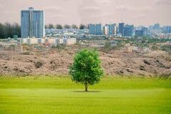 生态概念森林天旱和森林干旱的大厦 库存图片