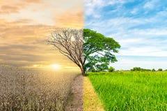 生态概念环境变动树森林天旱森林刷新 图库摄影