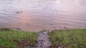 生态灾变 充斥在河Uzh, Uzhgorod,乌克兰 股票视频