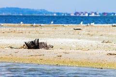 生态灾难,鸟的绝种,漏油,自然背景 免版税库存照片