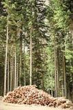生态砍伐森林在欧洲 库存图片
