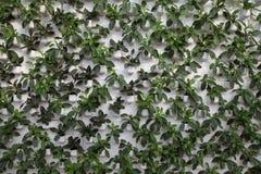 生态系第一棵绿色同水准蔬菜 免版税库存图片
