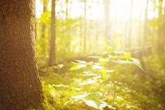 生态自然风景晴朗的背景 免版税图库摄影