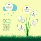 生态,与植物的构思设计Infographic  免版税库存照片