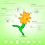 生态Infographic元素传染媒介例证 库存图片
