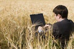 生意人域麦子 免版税库存图片