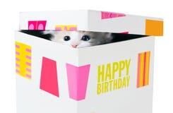生日礼物。偷看通过裂缝的小猫在盒盖之间 免版税图库摄影