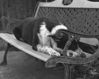 生机勃勃的狗 免版税库存图片