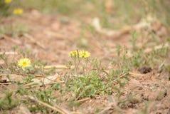 Wild plants in spring stock photo