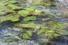 水生植物在河 免版税库存照片