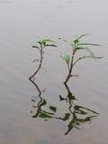 水生植物 库存图片