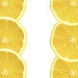 生气勃勃柠檬 库存照片