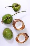 生气勃勃椰子 免版税图库摄影