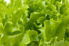 生气勃勃绿色莴苣沙拉 免版税库存照片