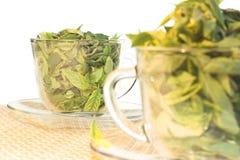 生气勃勃绿茶 免版税库存图片