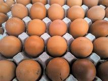 生气勃勃鸡蛋 库存照片
