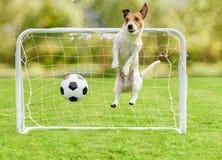 生气守门员承认了目标并且输掉了橄榄球足球比赛 免版税库存照片