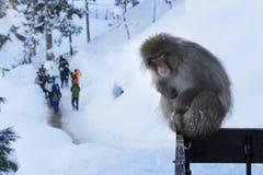 生气的猴子 免版税图库摄影