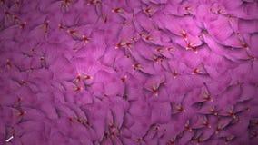 生气蓬勃的玫瑰花瓣转折 皇族释放例证