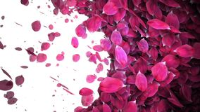 生气蓬勃的玫瑰花瓣转折
