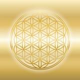 生活发光的金黄闪烁的光滑的金子花  皇族释放例证