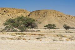 生活在一片无生命的沙漠 库存照片