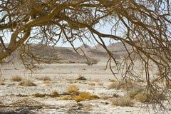 生活在一片无生命的沙漠 免版税库存图片