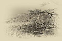 生活在一片无生命的沙漠 图库摄影