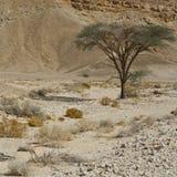 生活在一片无生命的沙漠 免版税图库摄影