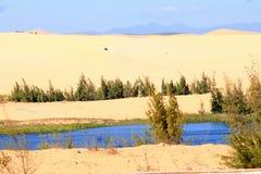 生活在沙漠 图库摄影