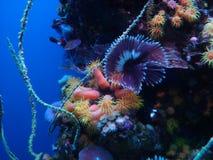 生活海洋水中 免版税库存图片