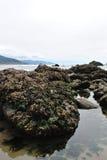 生活海洋 库存图片