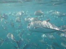 生活海洋 免版税图库摄影