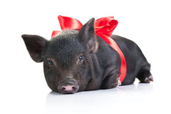 生活猪s 库存照片