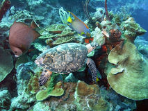 生活礁石 免版税库存图片