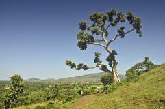 生活结构树 库存图片