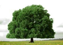 生活结构树 图库摄影