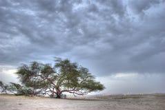 生活结构树 免版税库存图片