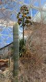生物圈二号-内部沙漠Eco系统 免版税库存图片