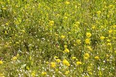生物多样性和能承受的环境的标志与一个五颜六色的草甸 免版税图库摄影